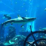 アトランティスをモチーフした水族館がドバイに!